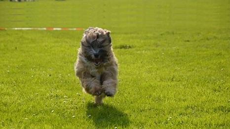 benji rennend