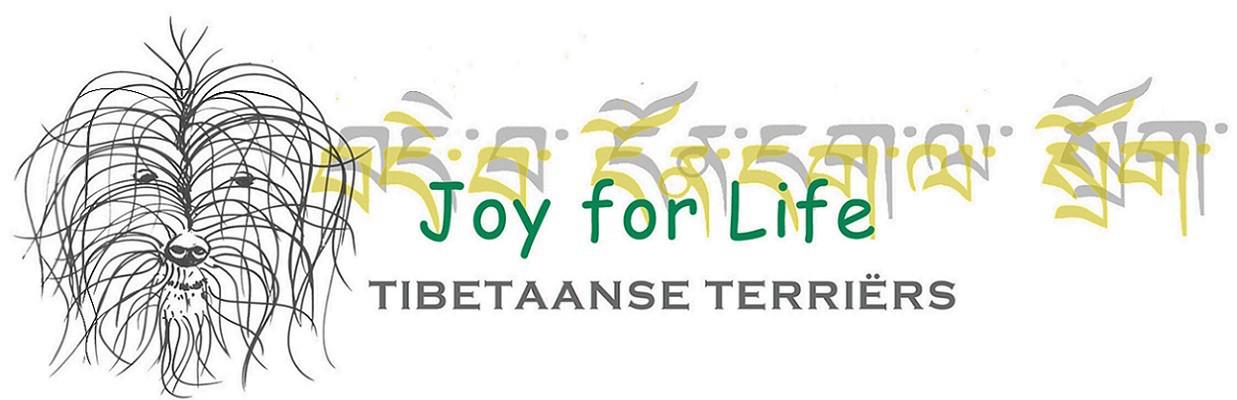 Joy For Life